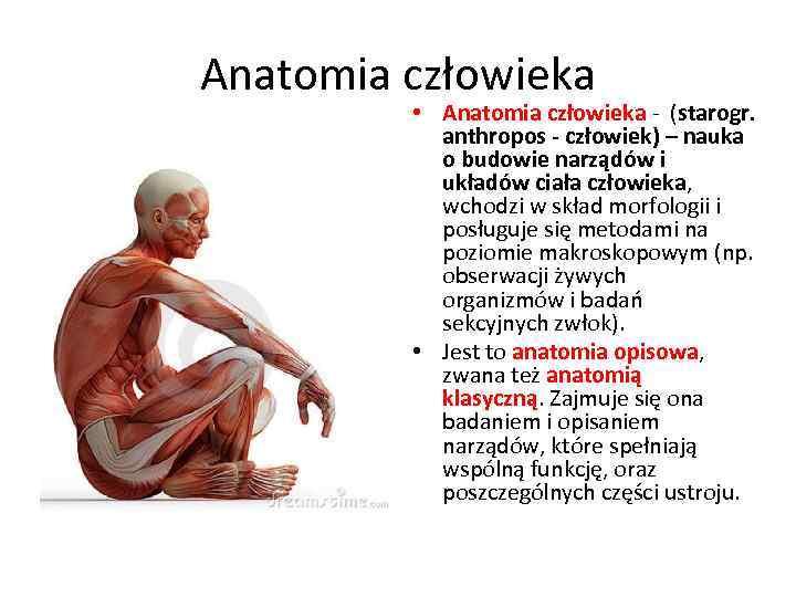 Anatomia człowieka • Anatomia człowieka - (starogr. anthropos - człowiek) – nauka o budowie