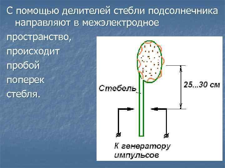 С помощью делителей стебли подсолнечника направляют в межэлектродное пространство, происходит пробой поперек стебля.