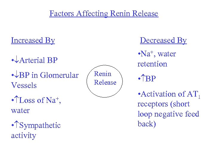 Factors Affecting Renin Release Increased By Decreased By • Na+, water retention • Arterial