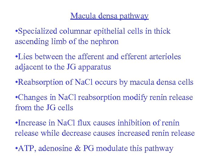 Macula densa pathway • Specialized columnar epithelial cells in thick ascending limb of the