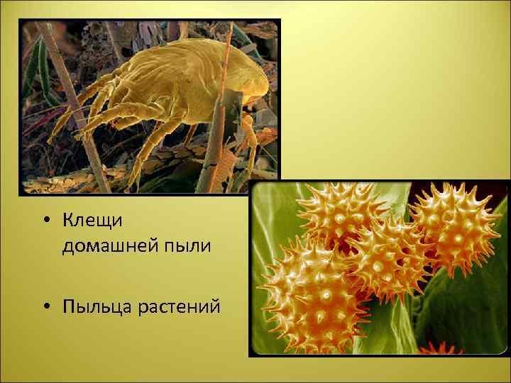 • Клещи домашней пыли • Пыльца растений