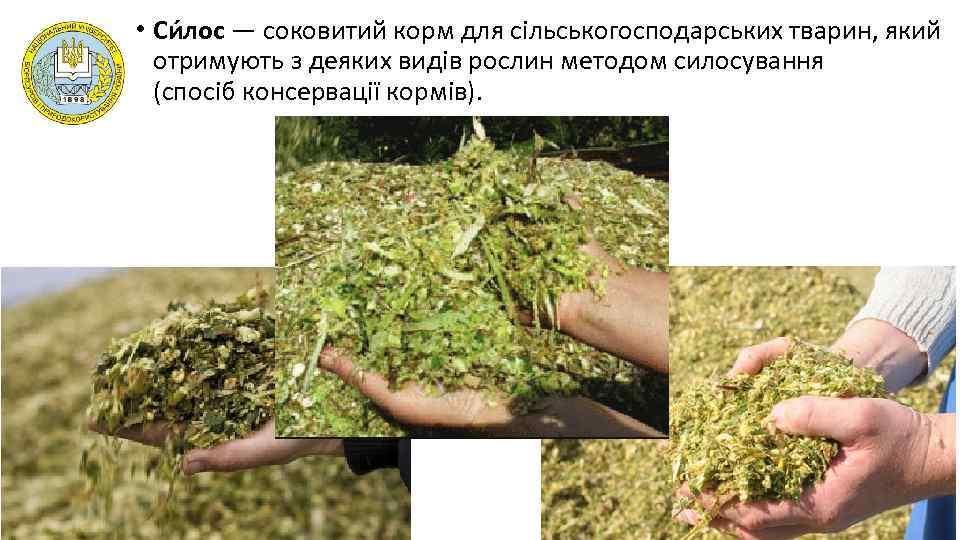 • Си лос — соковитий корм для сільськогосподарських тварин, який отримують з деяких