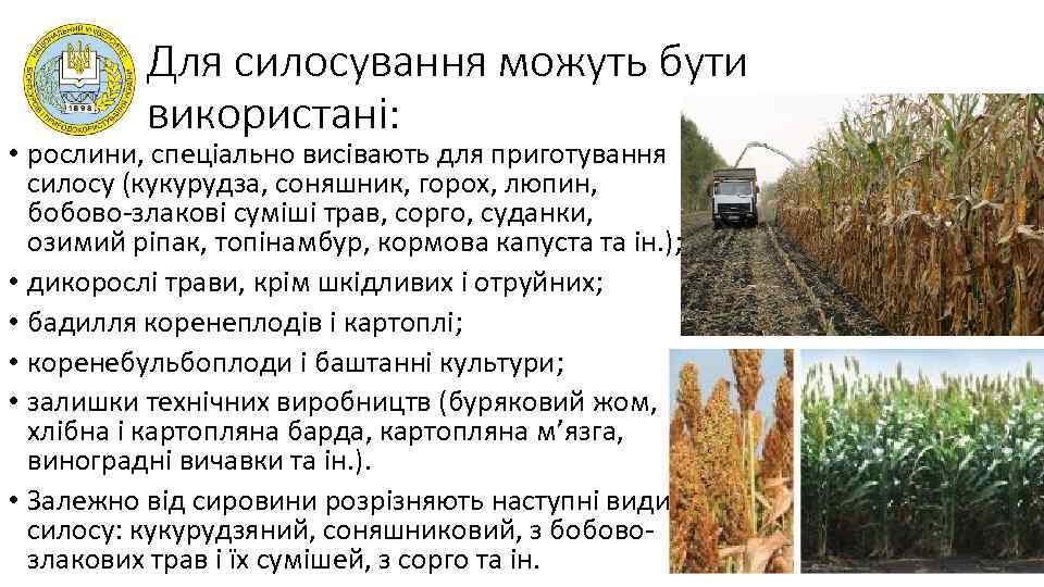 Для силосування можуть бути використані: • рослини, спеціально висівають для приготування силосу (кукурудза, соняшник,
