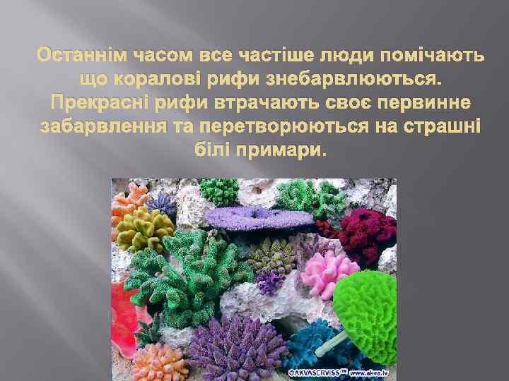 Останнім часом все частіше люди помічають що коралові рифи знебарвлюються. Прекрасні рифи втрачають своє