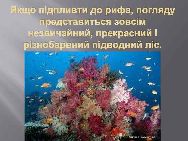 Якщо підпливти до рифа, погляду представиться зовсім незвичайний, прекрасний і різнобарвний підводний ліс.