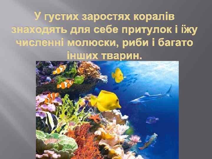 У густих заростях коралів знаходять для себе притулок і їжу численні молюски, риби і
