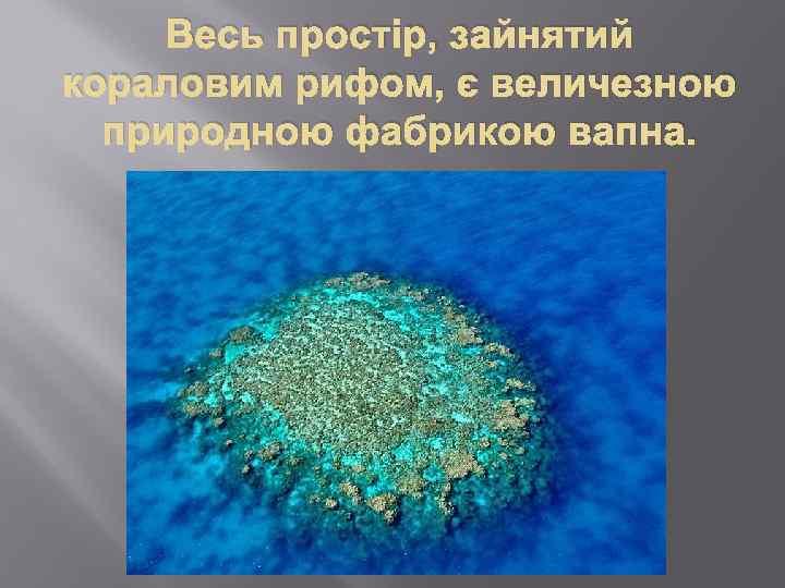Весь простір, зайнятий кораловим рифом, є величезною природною фабрикою вапна.