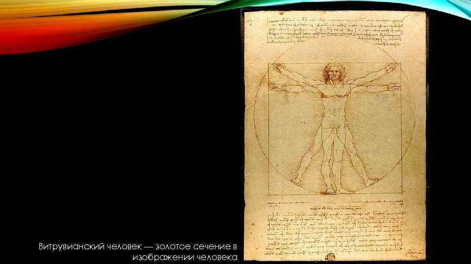 Витрувианский человек — золотое сечение в изображении человека