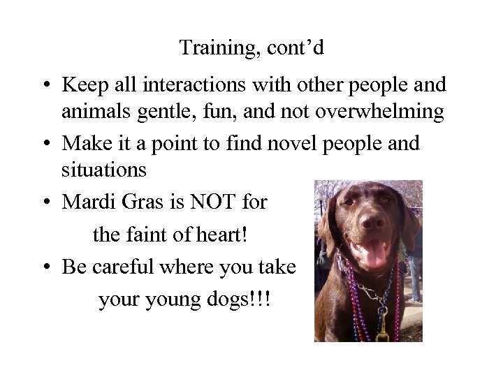 Training, cont'd • Keep all interactions with other people and animals gentle, fun, and