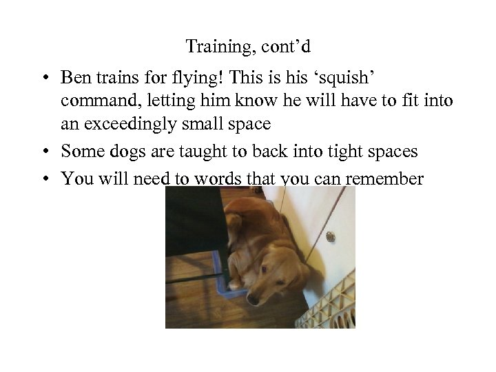 Training, cont'd • Ben trains for flying! This is his 'squish' command, letting him