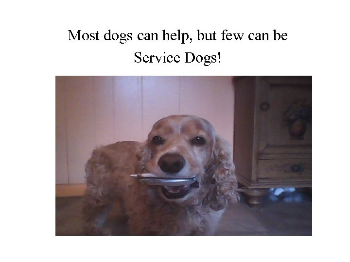 Most dogs can help, but few can be Service Dogs!