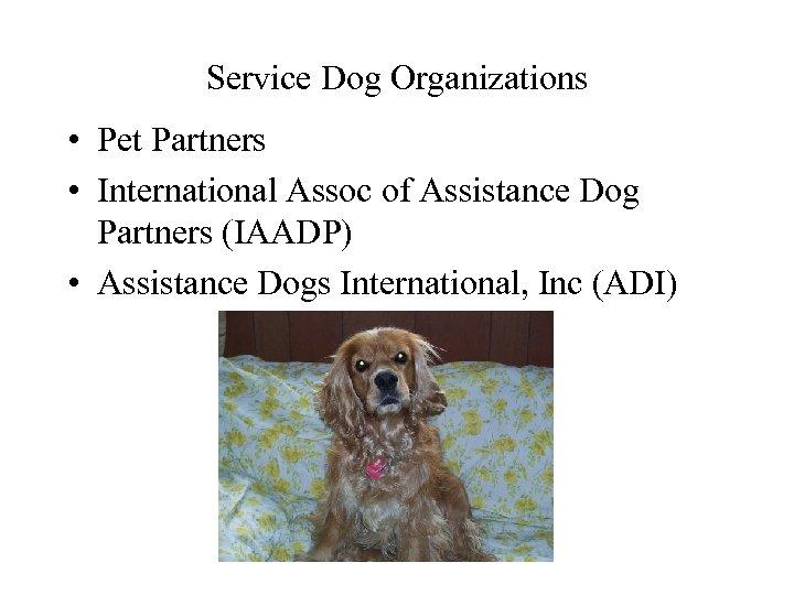Service Dog Organizations • Pet Partners • International Assoc of Assistance Dog Partners (IAADP)