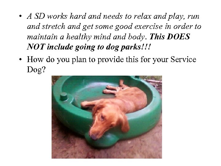 • A SD works hard and needs to relax and play, run and