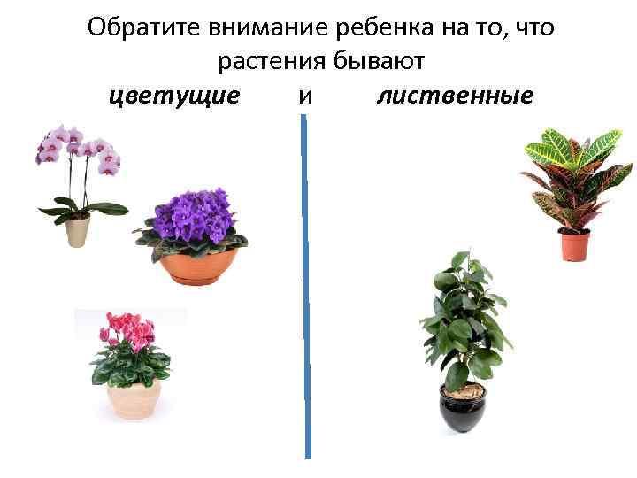 Обратите внимание ребенка на то, что растения бывают цветущие и лиственные