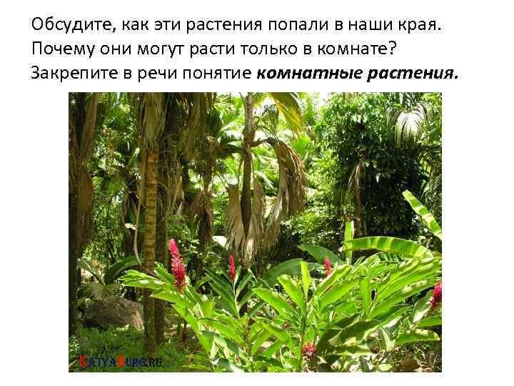 Обсудите, как эти растения попали в наши края. Почему они могут расти только в
