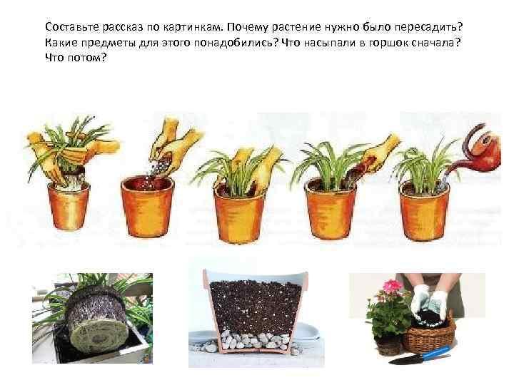 Составьте рассказ по картинкам. Почему растение нужно было пересадить? Какие предметы для этого понадобились?