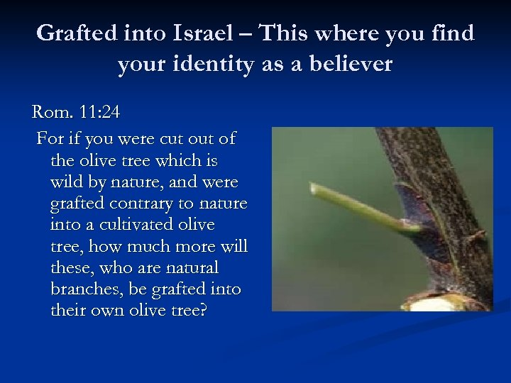 Grafted into Israel – This where you find your identity as a believer Rom.