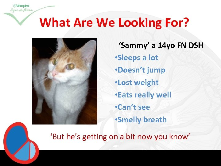 What Are We Looking For? 'Sammy' a 14 yo FN DSH • Sleeps a