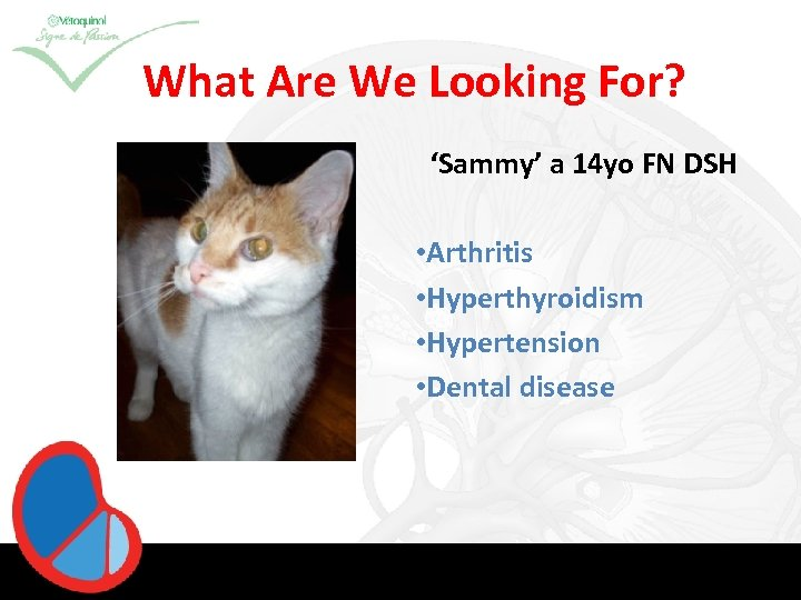 What Are We Looking For? 'Sammy' a 14 yo FN DSH • Arthritis •