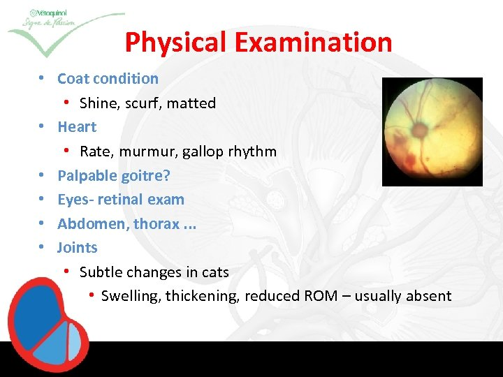 Physical Examination • Coat condition • Shine, scurf, matted • Heart • Rate, murmur,