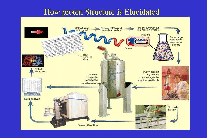 How proten Structure is Elucidated