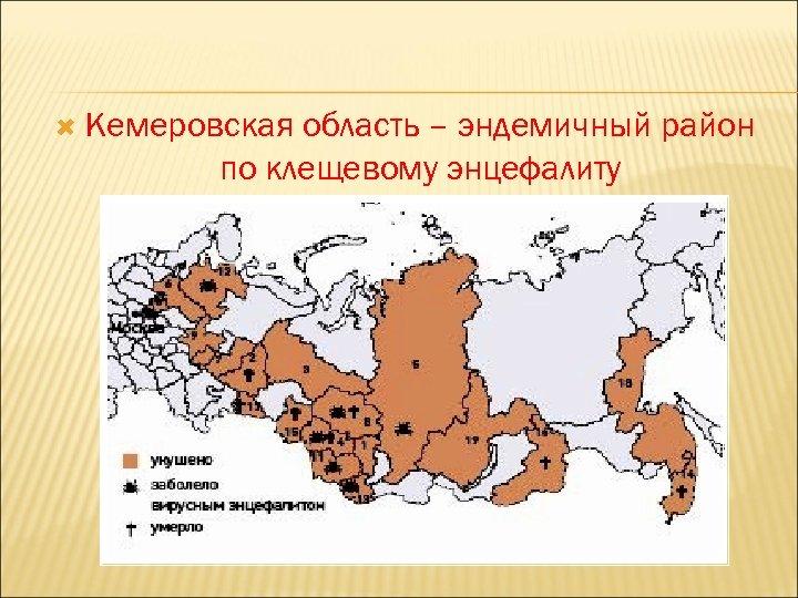 Кемеровская область – эндемичный район по клещевому энцефалиту