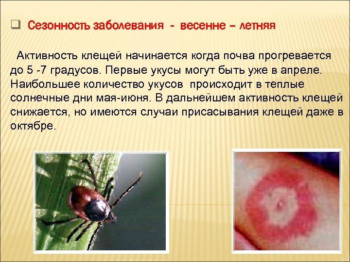 q Сезонность заболевания - весенне – летняя Активность клещей начинается когда почва прогревается до
