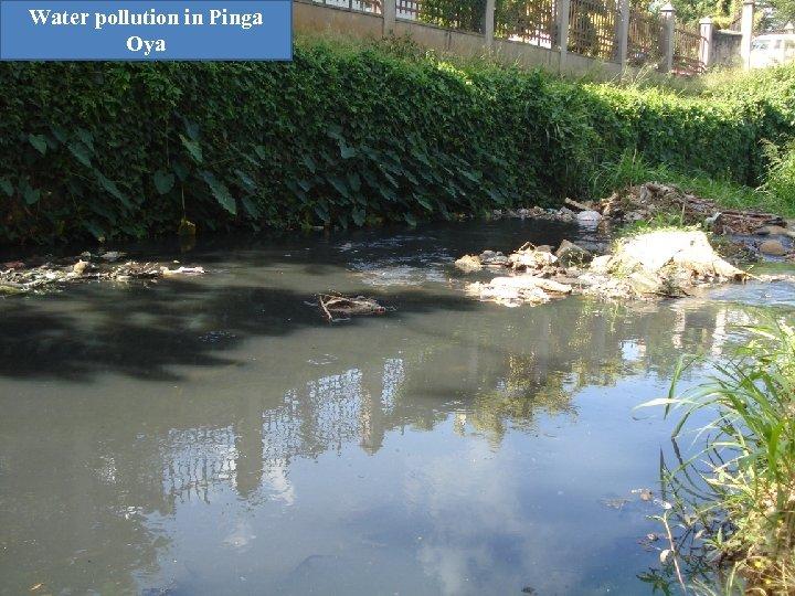 Water pollution in Pinga Oya