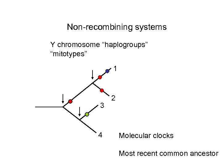 "Non-recombining systems Y chromosome ""haplogroups"" ""mitotypes"" 1 3 4 2 Molecular clocks Most recent"