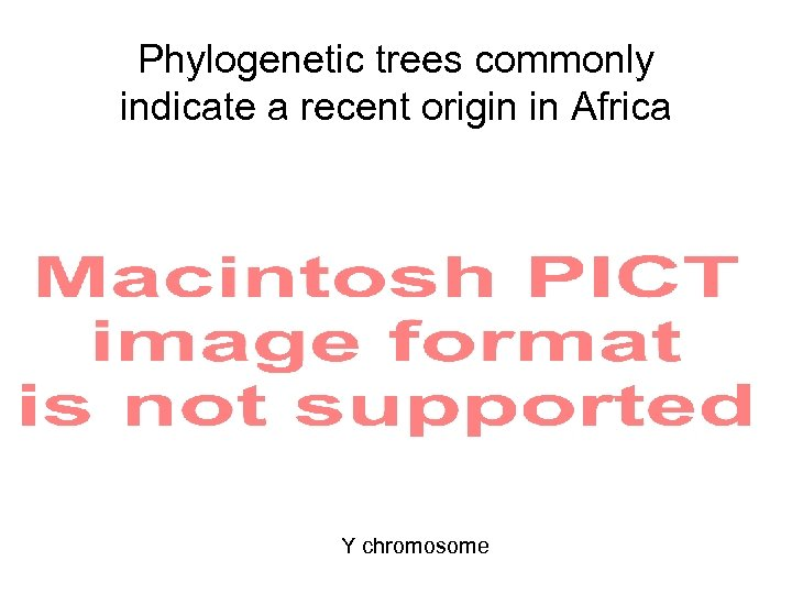 Phylogenetic trees commonly indicate a recent origin in Africa Y chromosome