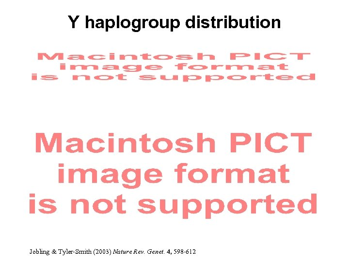 Y haplogroup distribution Jobling & Tyler-Smith (2003) Nature Rev. Genet. 4, 598 -612