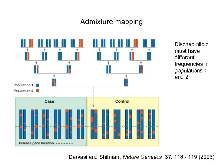 Admixture mapping Disease allele must have different frequencies in populations 1 and 2 Darvasi