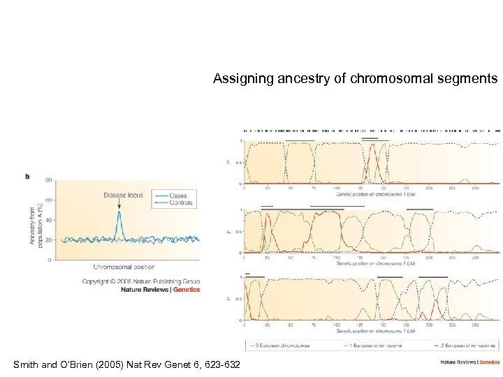 Assigning ancestry of chromosomal segments Smith and O'Brien (2005) Nat Rev Genet 6, 623