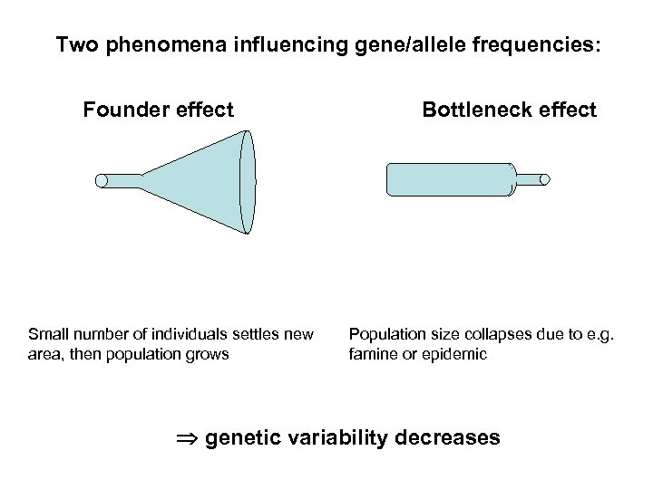 Two phenomena influencing gene/allele frequencies: Founder effect Small number of individuals settles new area,