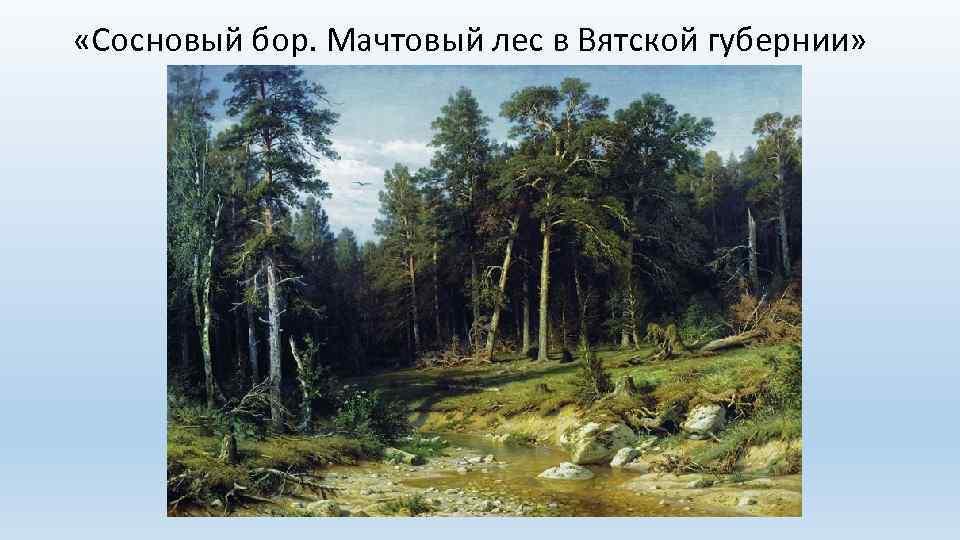«Сосновый бор. Мачтовый лес в Вятской губернии»