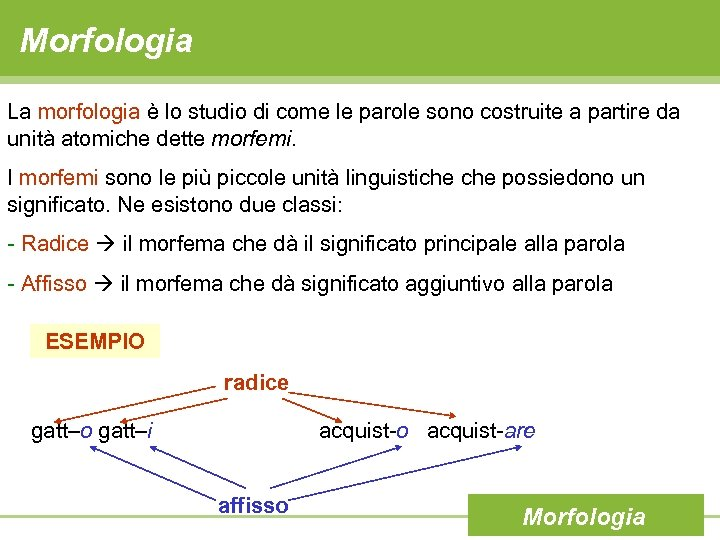 Morfologia La morfologia è lo studio di come le parole sono costruite a partire