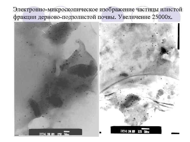 Электронно-микроскопическое изображение частицы илистой фракции дерново-подзолистой почвы. Увеличение 25000 х.