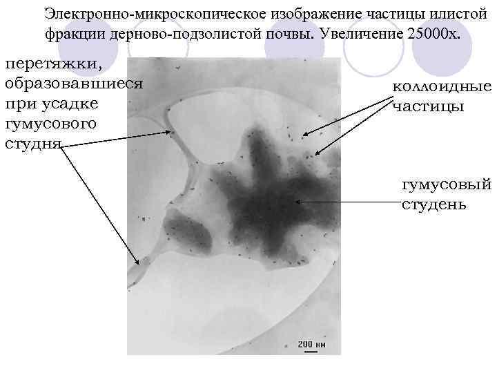 Электронно-микроскопическое изображение частицы илистой фракции дерново-подзолистой почвы. Увеличение 25000 х. перетяжки, образовавшиеся при усадке