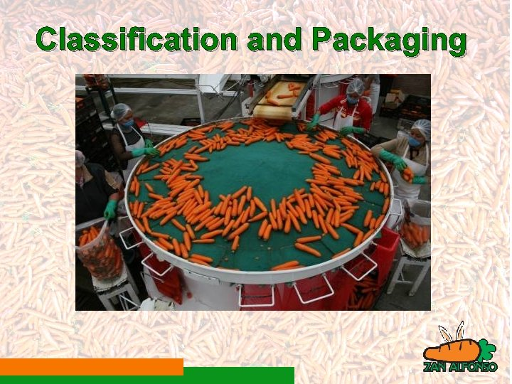 Classification and Packaging