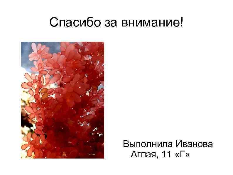 Спасибо за внимание! Выполнила Иванова Аглая, 11 «Г»