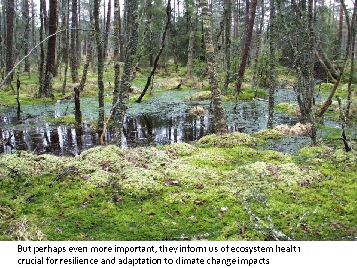 But perhaps even more important, they inform us of ecosystem health – crucial for