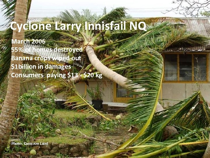 Cyclone Larry Innisfail NQ March 2006 55% of homes destroyed Banana crops wiped out