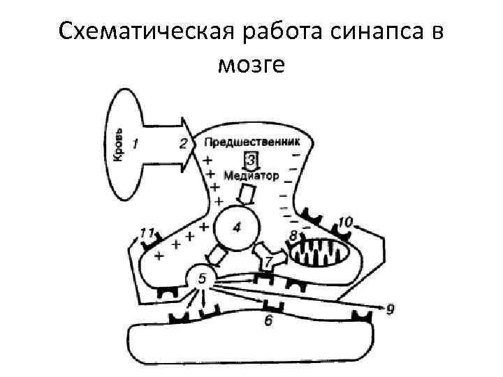 Схематическая работа синапса в мозге