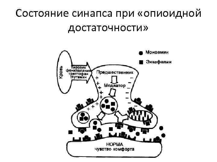 Состояние синапса при «опиоидной достаточности»