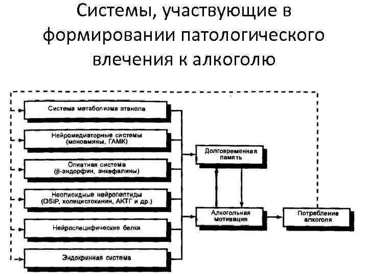 Системы, участвующие в формировании патологического влечения к алкоголю