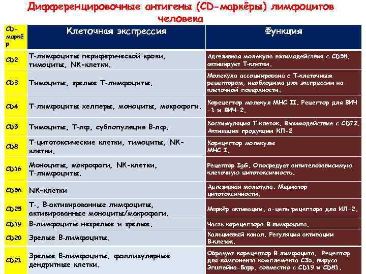 CDмаркё р Дифференцировочные антигены (CD-маркёры) лимфоцитов человека Клеточная экспрессия Функция CD 2 Т‑лимфоциты периферической