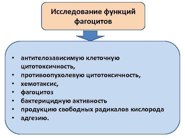 Исследование функций фагоцитов • антителозависимую клеточную цитотоксичность, • противоопухолевую цитотоксичность, • хемотаксис, • фагоцитоз