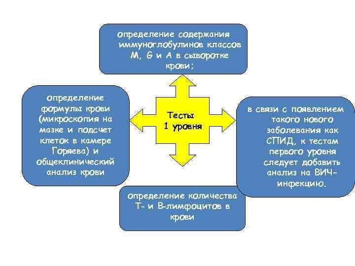 определение содержания иммуноглобулинов классов M, G и A в сыворотке крови; определение формулы крови