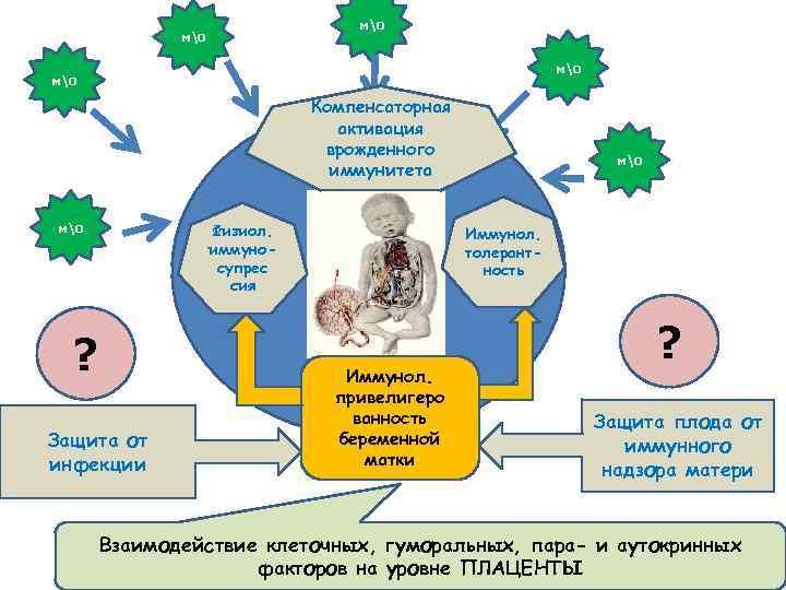 мо мо Компенсаторная активация врожденного иммунитета Физиол. иммуносупрес сия мо ? Защита от инфекции