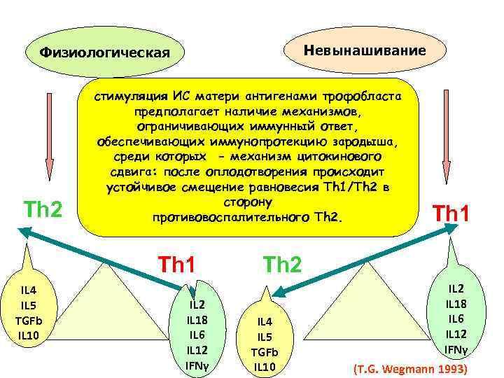Невынашивание Физиологическая Th 2 стимуляция ИС матери антигенами трофобласта предполагает наличие механизмов, ограничивающих иммунный